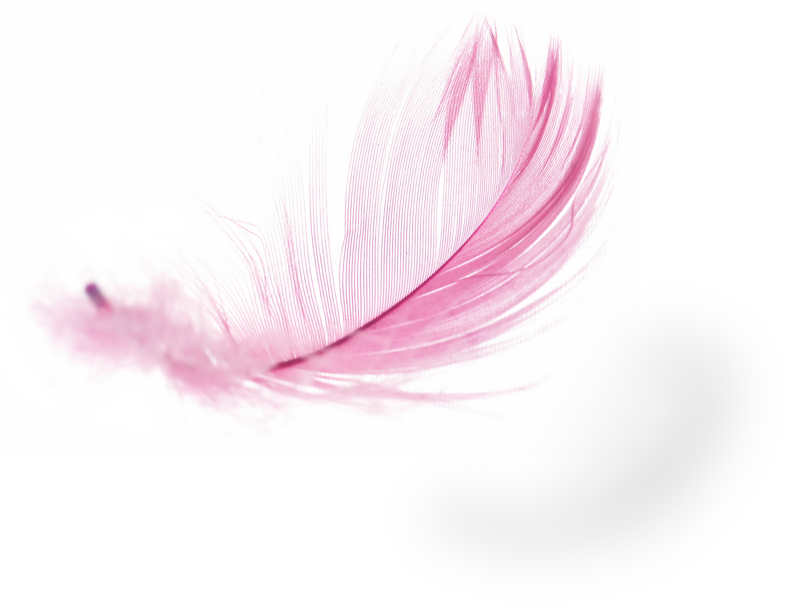 bigstock-Feather-4232008.jpg